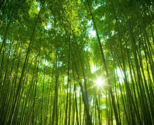 Photo Gallery - Commercial Bamboo Farming, How To Plant Bamboo